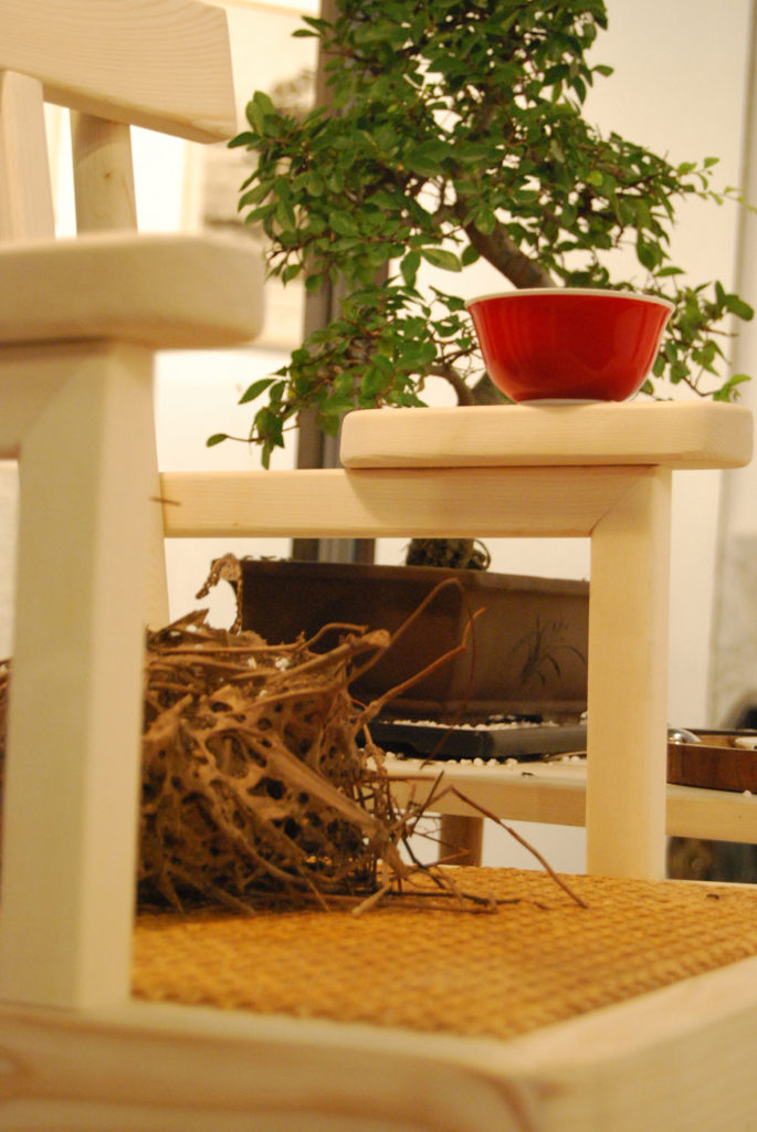 Polyrhachis Dives kin selection - maiden aunt weaving chair, 2012, wood and glass case, artificial nest of ants, chair, coffee table, bonsai plant, lamp, various materials, environmental dimensions, courtesy Macro - Museo d'Arte Contemporanea Rome, detail